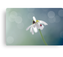 Chamomile and Ladybird Canvas Print
