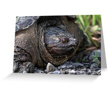 40 Million Years Of Evolution / Adult Snapping Turtle Greeting Card