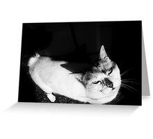 Miaow Moods Greeting Card