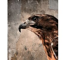 Red Tailed Hawk, Redux Photographic Print