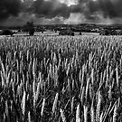 Field and rays by ajgosling