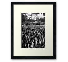 Field and rays Framed Print