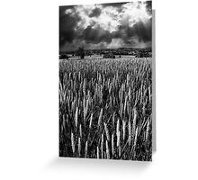 Field and rays Greeting Card