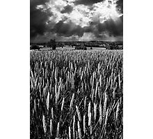 Field and rays Photographic Print