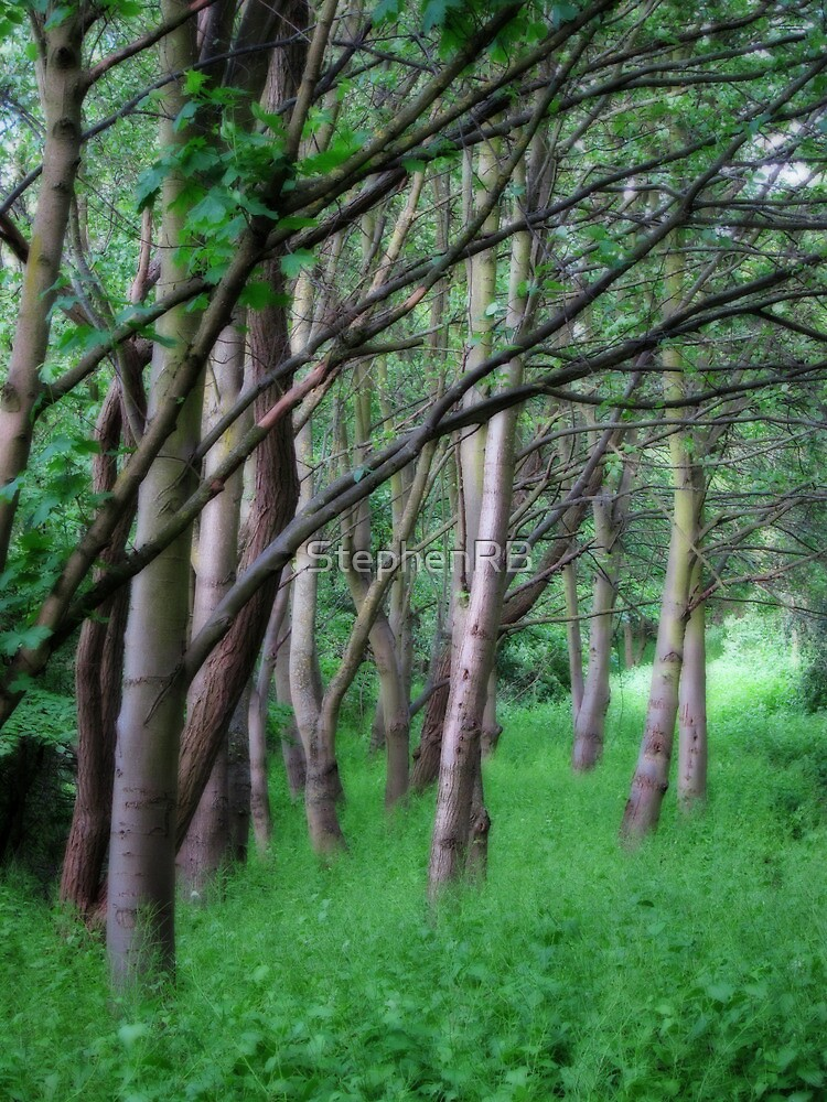 Woodland view by StephenRB