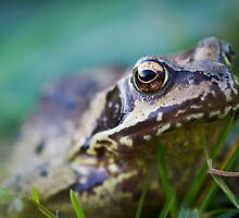 Common Frog in the Grass by Chris West