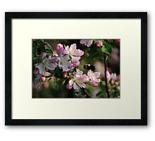 Bumble & Blossoms Framed Print
