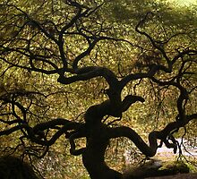 Twisted Japanese Maple by nwexposure