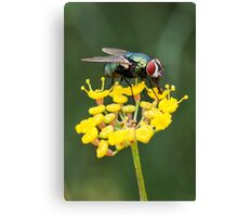 Fly on Fennel Canvas Print