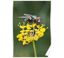 Fly on Fennel Poster