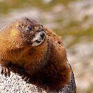 Marmot III by Gary Lengyel