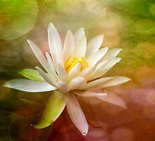 Water Lily by Brenda Burnett