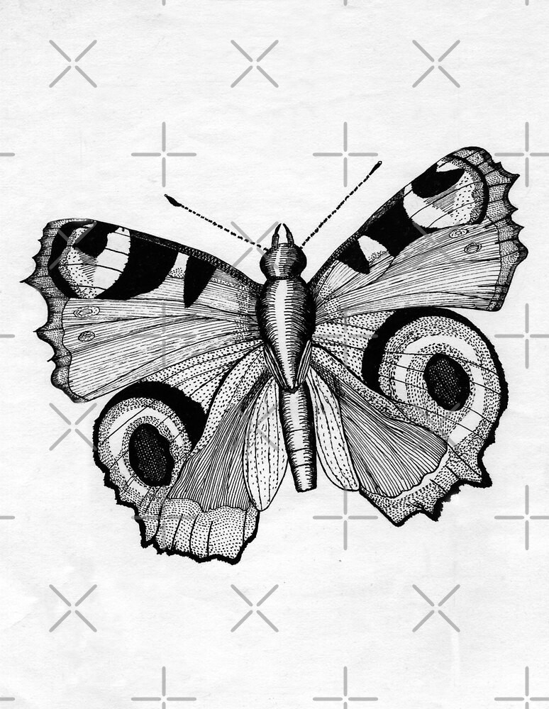 048 - ADULT PEACOCK BUTTERFLY - DAVE EDWARDS - PEN & INK - 1981 by BLYTHART
