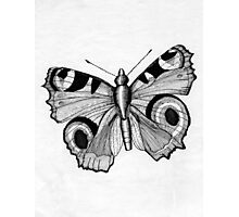 048 - ADULT PEACOCK BUTTERFLY - DAVE EDWARDS - PEN & INK - 1981 Photographic Print