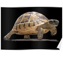 Marching Baby Tortoise Cartoon Vector Isolated Poster