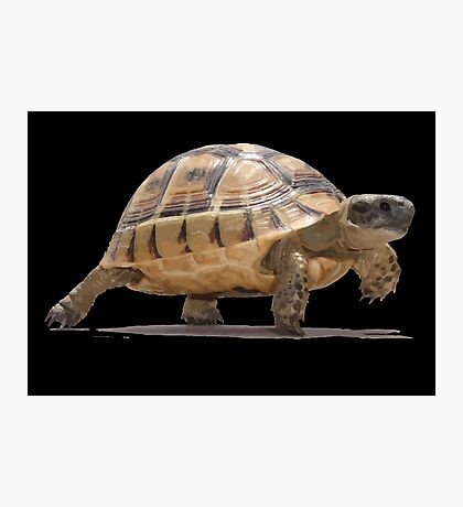 Marching Baby Tortoise Cartoon Vector Isolated Photographic Print