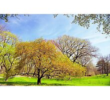 Spring Trees Photographic Print