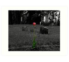 Grave Tulip Art Print