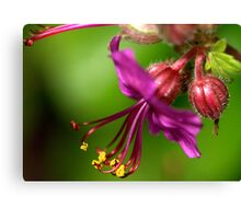 Flower one to one................. Canvas Print