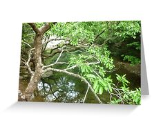 sparkling cool green pool shaded by tree on mountain hike Greeting Card
