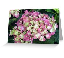 stunning purple and white flowers Greeting Card
