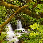 Tokul Creek by Mikhail Lenitsyn