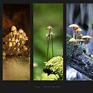 Fungi by Steven  Sandner