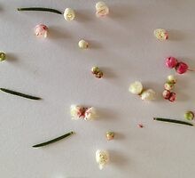 Blossom by Sorcha Whitehorse ©