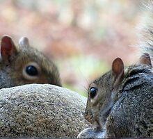 Squirrel Hard Rock Café by Jean Gregory  Evans