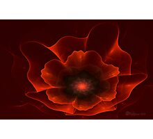 Apo Oriental Poppy Photographic Print