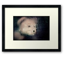The best laid plans of teddies and men... Framed Print