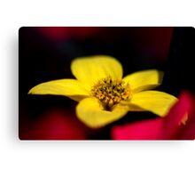A Flower up close... Canvas Print