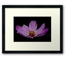 Pink Flower For Tina Framed Print