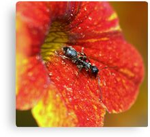 A Working Ant............from a series..... Canvas Print
