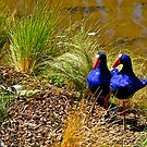 Garden ornamental birds, New Zealand. by johnrf