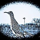 Texas Roadrunner by Pat Moore