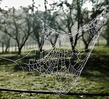 web on wire by lols