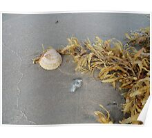 shell with sea weed Poster