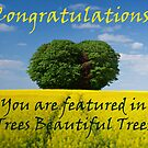 Trees Beautiful Trees Feature Banner by Giles Clare