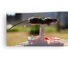 Planking mouse! Canvas Print
