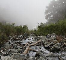 Foggy Stream by Troy Gooch