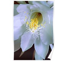 """One Night Only"" - Night Blooming Cereus 1 Poster"
