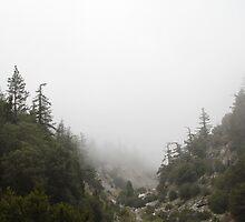 Valley of Fog by Troy Gooch