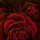 Red Roses (Oil on canvas) by shellybell