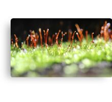 moss kingdom Canvas Print