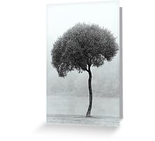 24.9.2015: Lonely Tree Greeting Card