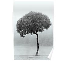 24.9.2015: Lonely Tree Poster