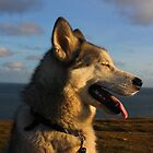Willit in the Sun by Pippa Carvell
