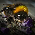 Just Bumble (2) by Josie Jackson