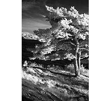 Infrared 1 Photographic Print